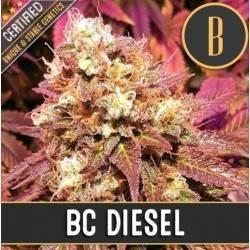 BC Diesel · Blimburn Seeds
