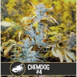 Chemdog 4 · Blimburn Seeds
