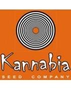 Kannabia Seeds Company